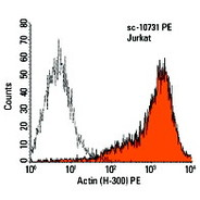 Actin Antibody (H-300) PE