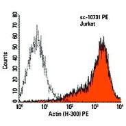 Actin Antibody (H-300)