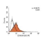 CD10 Antibody (H-321)