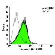 caspase-1 Antibody (A-19) PE
