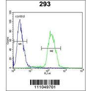 MYC Antibody (S62)